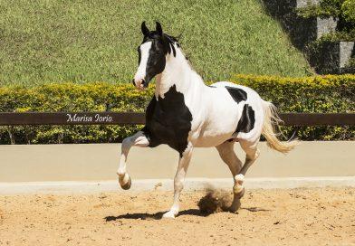 Cavalos celebridades